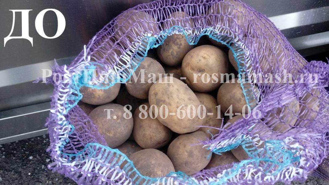 Мойка грязного картофеля на Машине для полировки и мойки корнеплодов GB-1000