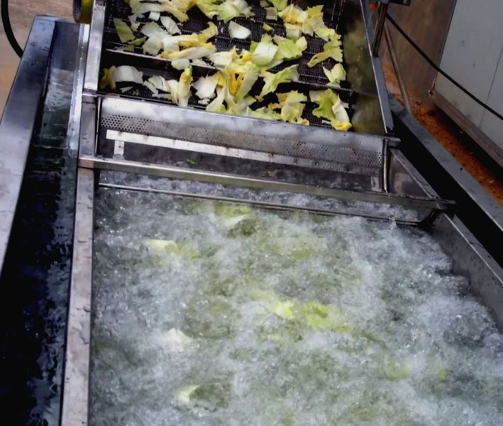Машина для мойки  листовых и кочанных салатов