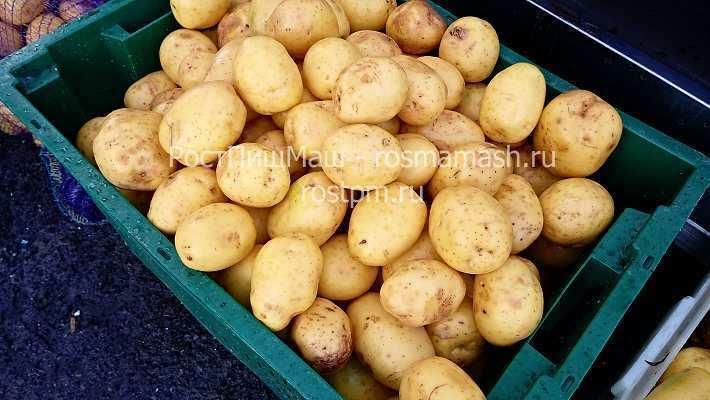 Машина щеточная для мойки картофеля GB-1800