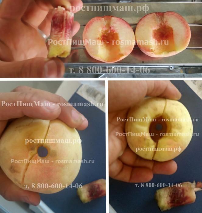 Удаление косточки у персика на Машине для удаления косточек из абрикоса, сливы, персика