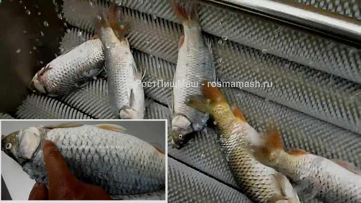 Машина для полировки и мойки рыбы