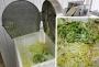 Овощерезка для нарезки (шинковки) пекинской капусты РПМ-ЛШ-01