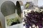 Овощерезка для нарезки листьев Василиска QS-20II (РПМ-ЛШ-01)